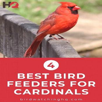 The 4 BEST Bird Feeders For Cardinals (That Actually Work!) - Bird Watching HQ These are the BEST c