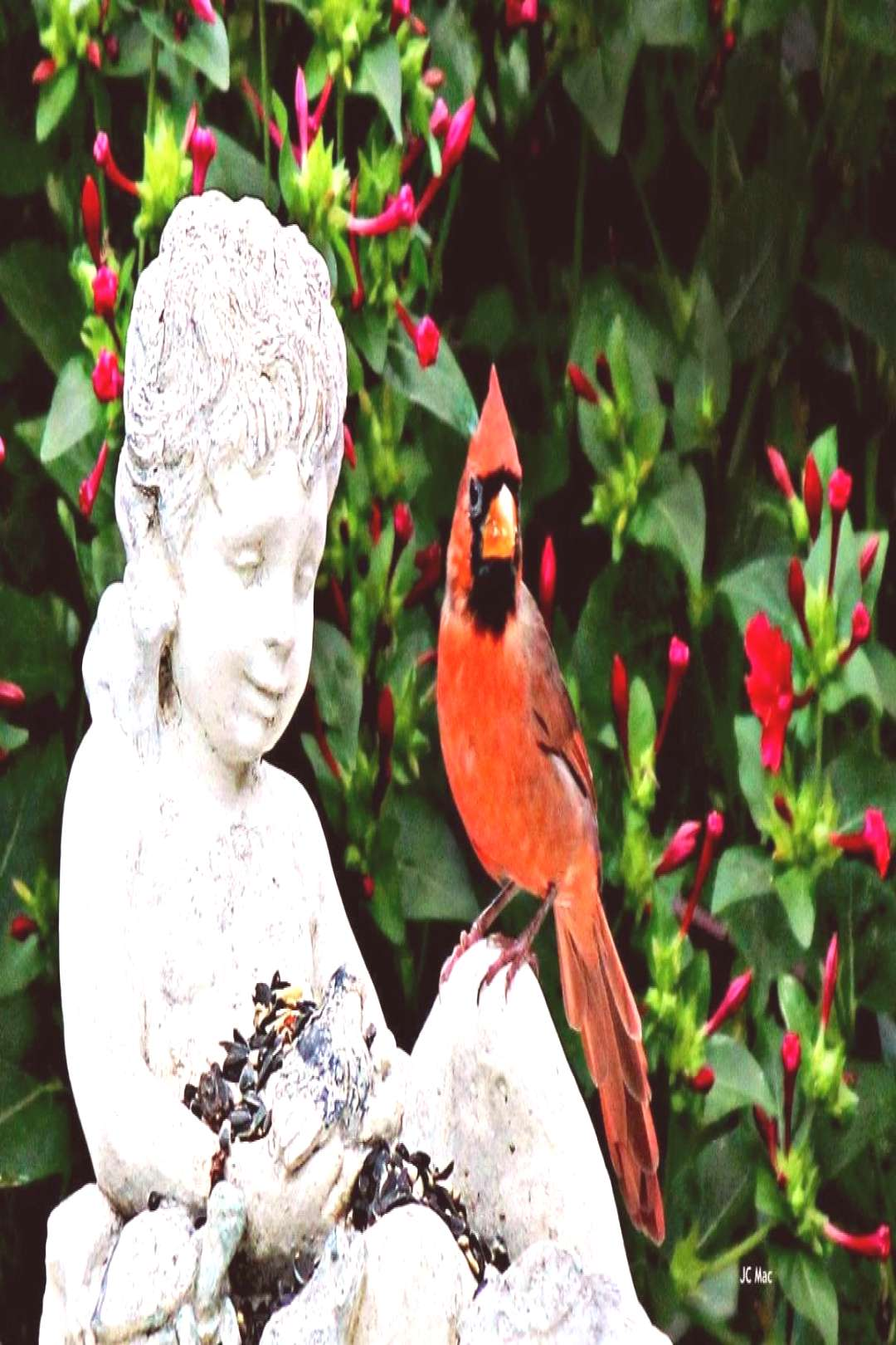 """The Red Birds have a special meaning …. """"Cardinals""""!!#birds"""
